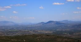 jaen olivenplantagen